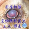 葡萄膜炎继发青光眼的症状