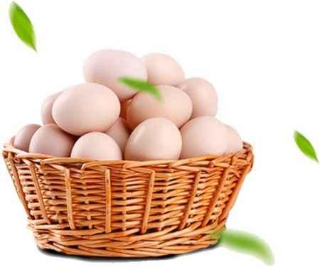 天津生态鸡蛋销售