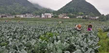 批发蔬菜|批发蔬菜公司