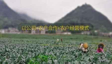 德江蔬菜公司